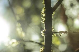 bemoste boomstam met bokeh achtergrond foto