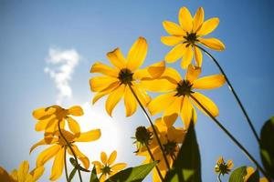 gele bloemen in de zomer foto