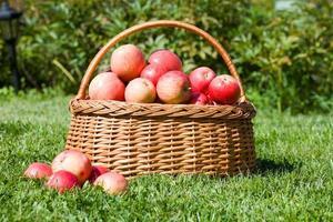 mand met rode appelkosten foto