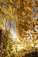 lage hoek weergave van herfstbladeren