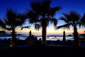 palmboom silhouet met zonsondergang foto