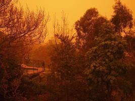 uitzicht op de tuin tijdens stofstorm foto