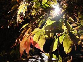 herfst bij arboretum westonbirt