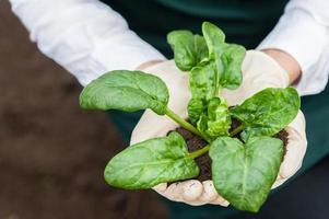 biologische voedselproductie. foto