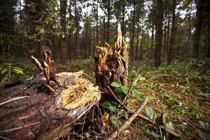 omgevallen boom