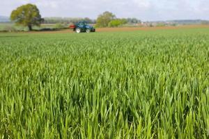 jonge tarwe gewas met tractor op achtergrond foto