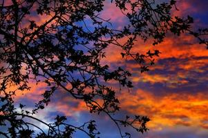surrealistische schemering door takken: dramatische zonsondergang verlichte boom foto