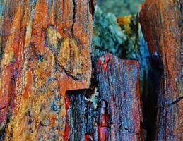 versteend hout foto