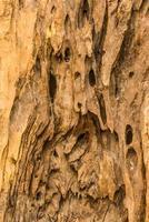hout patroon foto