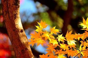 gele bladeren foto