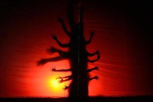 silhouet van duivel foto