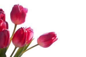 sluit omhoog van tulpenboeket dat met exemplaarruimte wordt geïsoleerd foto