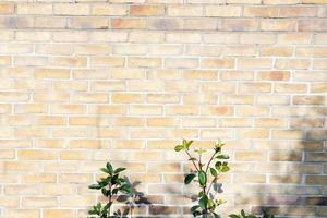 plant op een bakstenen muur foto