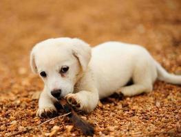 puppy foto