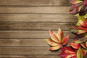 herfst achtergrond met kopie ruimte foto
