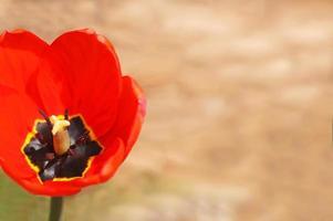 kopieer ruimte met levendig gekleurd bloemaccent foto