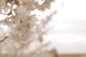 bloemen achtergrond w / kopie ruimte foto