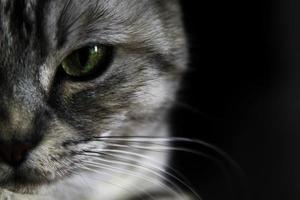 Kat gezicht foto