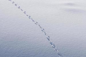menselijke voetafdrukken in de sneeuw foto