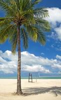 palmboom strand foto