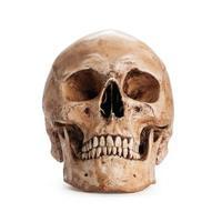 schedel model foto