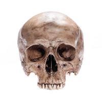 geïsoleerde schedel foto