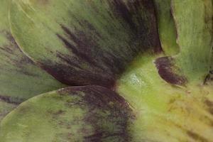 close-up artisjokbladeren foto