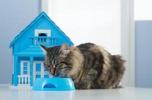 kat en model huis foto