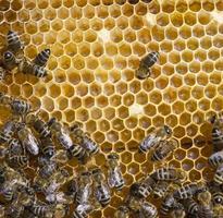 honingraat en een bij die werkt foto