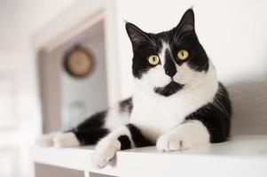 gedomesticeerde kat foto