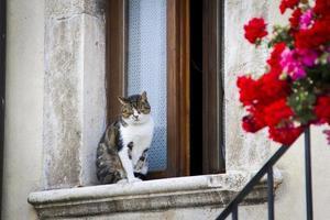 kat rustend op een raam foto