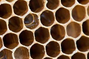 honingraat met zoete honing