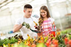 planten en verzorgen van crotonplant in kas foto