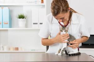 veterinair door naar een kat te luisteren foto
