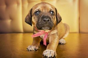 kleine grappige puppy foto