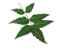 bladeren van neem foto