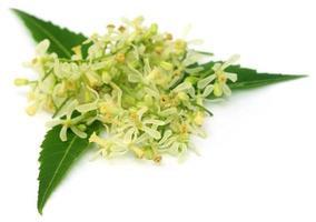 geneeskrachtige neembladeren en bloem foto