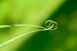 close up van spiraal groen blad foto