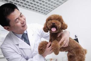 hond in het kantoor van de dierenarts foto