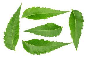 geneeskrachtige neembladeren foto