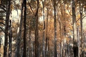 jungle in het herfstseizoen foto
