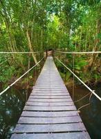 brug naar de jungle foto
