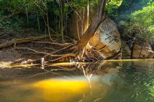 ochtend in de wilde jungle foto