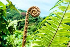 tropische plant in de jungle foto