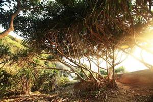jungle op een prachtig eiland foto