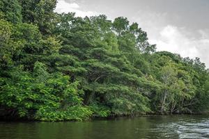 de rivier bentota tussen de jungle. foto