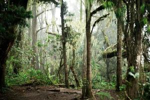 betoverde jungle foto