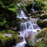 jungle waterval nieuw-zeeland foto