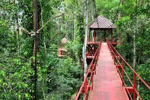brug naar jungle foto