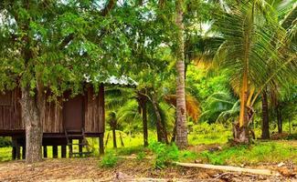 hut in de jungle foto